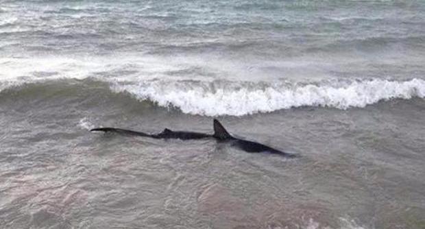 Moggi e gli squali: l'incubo è sempre in agguato