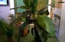 Expo, Expo, banani e piante di ananas