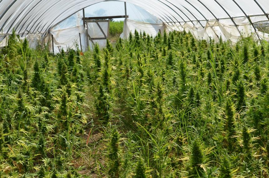 Coltivare marijuana: i tempi del proibizionismo stanno per finire